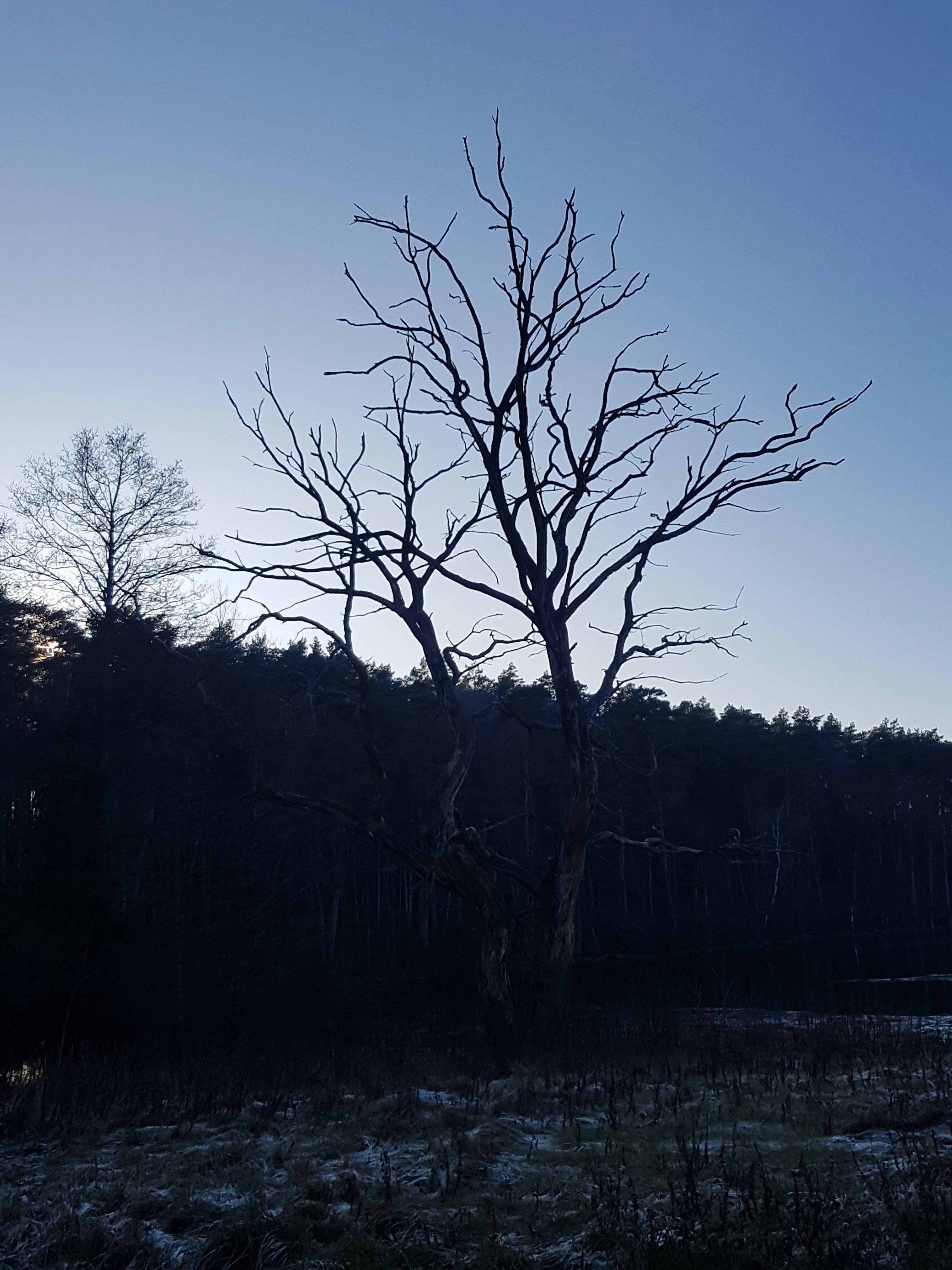 Lunatikų žygis gruodžio 14 d. Tarp 5 ežerų.